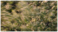 Who  has  seen  the  wind? (Ted Bowman Photography) Tags: motion abstract spring longexposure nature impressionism