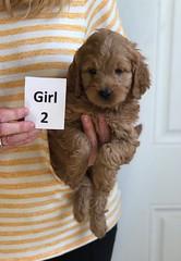 Baby Girl 2 3-30