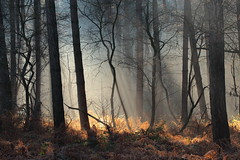 Lumière dans les bois / Light in the woods (Laurent Castiau) Tags: woods bois forest forêt lumière light canonef70300mmf456lisusm télézoom telephotozoomlens hiver winter nature canoneos6d