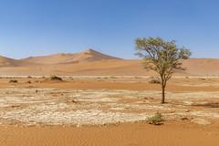 _RJS4594 (rjsnyc2) Tags: 2019 africa d850 desert dunes landscape namibia nikon outdoors photography remoteyear richardsilver richardsilverphoto safari sand sanddune travel travelphotographer animal camping nature tent trees wildlife