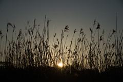 2017 Avril - Lever de soleil.015 (hubert_lan562) Tags: soleil sun lever lanester lorient morbihan bretagne 56 bzh matin ciel nature