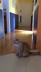 Flying cat (Luckyquebec) Tags: cat katz gato jump saute flying video