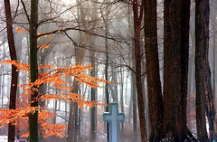 "Cincinnati - Spring Grove Cemetery & Arboretum ""Cross On Foggy/Winter Morning"" (David Paul Ohmer) Tags: cincinnati ohio spring grove cemetery arboretum cross fog winter morning"