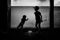 Aquarium (tomorca) Tags: children kids people boy silhouette fish monochrome blackandwhite fujifilm xt2