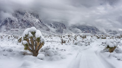 First Tracks (magnetic_red) Tags: snow snowy snowcapped winter weather storm clouds fog mountains lowhanging trail road tracks remote rural scenic joshuatrees americanwest
