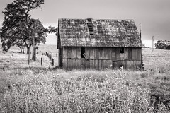 Barn with Metal Roof (Randy Bayne) Tags: abandoned barn building corrugated grass green metal old roof rust rusted tree yellow calaveras california landscape rural blackandwhite monochrome