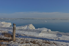 Lakeside (gabi-h) Tags: fence snow ice pole cableguardrail lakeontario gabih princeedwardcounty winter water fencefriday huyckspoint blue white grass shadows floating