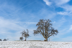 Blue Sky Trees - February 2019 II (boettcher.photography) Tags: tree baum trees bäume schnee snow februar february winter 2019 dilsberg neckargemünd rheinneckarkreis kurpfalz badenwürttemberg deutschland germany sashahasha boettcherphotography boettcherphotos sky himmel wolken clouds natut nature naturfotografie landschaft landscape