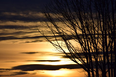 Simple things (James_D_Images) Tags: sunset evening sun clouds bare tree branches silhouette yellow gold black light shadow