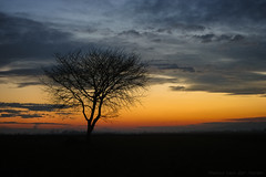 Lone Tree (mesocyclone70) Tags: tree lone solitary sunset sky twilight romania silhouette transylvania evening colors alone