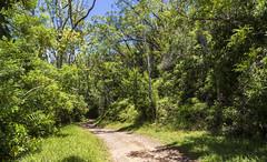 Parc Ivoloina / Парк Иволоина (dmilokt) Tags: природа nature пейзаж landscape река river dmilokt дорога road