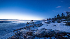 Waiting for the Northern Lights.. (Mika Lehtinen) Tags: night winter blue cold snow sky stars nightsky bluehour rocks stone ice march frozensea winterlandscape landscape 14mm samyang nikon d750 bonsai pine tree woods finland jakobstad fäboda afterdark latenight