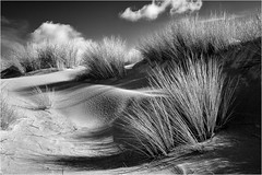 Dunes (philippeprovost1) Tags: dunes sable oyats westhoek lumière contraste perspective nature monochrome plage sand light beach