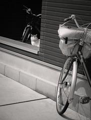 Enjoying the afternoon sun (Bill Morgan) Tags: fujifilm fuji xpro2 35mm f2 bw jpeg acros alienskin exposurex4