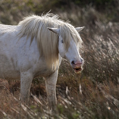 Camargue horse Speaking (JLM62380) Tags: cheval light white blanc camargue france nature chevaux horse saintesmariesdelamer animal ciel arbre champ