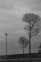 trees and a streetlight (EllaH52) Tags: spring tree trees streetlight lamppost greyscale monochrome blackwhite minimalism simplicity landscape