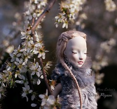 Closed ☀️ (pure_embers) Tags: pure laura embers porcelain bjd doll dolls england uk girl shirrstone shelter urban pigeon pureembers photography photo ball joint portrait fine art trees sunshine sun