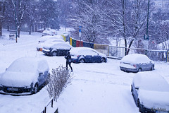 It's snowing (Ranildum) Tags: snow itssnowing tree trees car street city slovakia bratislava canon eos77d canoneos77d