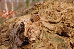 Wood textures (Sundornvic) Tags: wood tree texture ight grain broken rotting decay pentaxart pentax k70