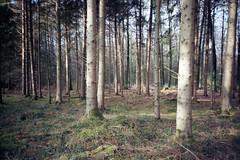 The forest (photogunni) Tags: lomo lca kodak colorplus200