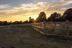 Sunset behind the fence (mystero233) Tags: fence sunset sun uk england britain autumn tree landscape outdoor papworth field grass sky dusk yellow clouds nature light sunrays