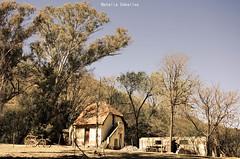 Abandono - La Falda (NatyCeballos) Tags: hoteleden hotel abandonment abbandonato abandono abandoned ruins ruinas arboles airelibre lafalda deterioro