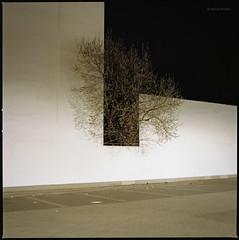 Ungebändigt (Konrad Winkler) Tags: berlin parkplatz baum hinterhof licht nacht kodakportra160 hasselblad503cx mittelformat 6x6 langzeitbelichtung epsonv800