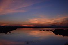 Salinas de Santa Pola - patitos (anabdeharo) Tags: nature animals ducks landscape colors lake sunshine sunset sky clouds photography nikon nikon3200 35mm