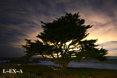 Tree of Light (Long Exposure Art (L~EX~A)) Tags: monterey california travel montereybay longexposure pacificgrove nikon tamron tamron1530 nikond750