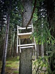 Hochsitz (Maquarius) Tags: jagdsitz hochsitz stuhl klappstuhl wald fichte tanne ast aufgehängt jagd jäger ansitzjagd natur franken