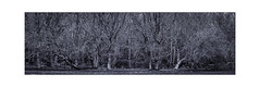 Dark Days. (muddlemaker1967) Tags: hampshire landscape photography thenewforest national park blackwhite trees winter 2019 panorama fujifilm xt1 fujinon xf 50140mm f28 r lm ois wr