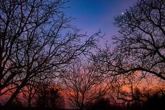 Sunset (Péter Vida) Tags: sunset sky wood moon natural winter naplemente égbolt fa hold természet tél