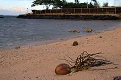 Coconut by shore (ALOHA de HAWAII) Tags: alamoanabeachpark