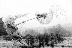 blown (khrawlings) Tags: trentham gardens fairy steel wire dandelion bw blackandwhite monochrome staffordshire england robinwright