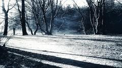 whimsical light (♥Adriënne - for a better and peaceful world -) Tags: hulst clinge snapseed trees shadows light ♥adrienne addyvanrooij digitalpaintings sidebyside winter thenetherlands zeeuwsvlaanderen samsungs5