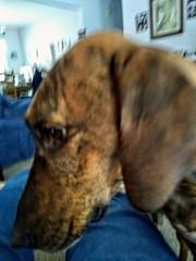 Puppy Dog Love (neukomment) Tags: lovepotion flickrfriday pets dogs perros hund