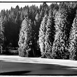 Wald thumbnail