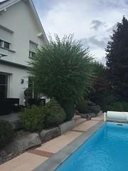 """Sadifel Sarl Pool68 gehört zur TOP 10 des bsw-Awards 2018 in der Kategorie """"Vorher - Nachher"""". (Bundesverband Schwimmbad & Wellness) Tags: bswbundesverbandschwimmbadundwellness bswaward pool pools schwimmbad schwimmbäder"""