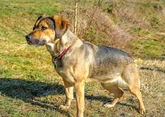 Hera (Andi Fritzsch) Tags: hera hund hunde dog dogs doglovers dogphotography haustier animal animallovers animalphotography nature naturephotography fantasticnature