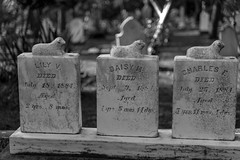 Lily, Daisy and Charles (Joe Josephs: 3,166,284 views - thank you) Tags: death cemetary grave graveyard bw monochrome blackandwhite photojournalism