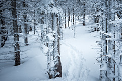 Whiteout (Aymeric Gouin) Tags: québec canada steanne montagne mountain forest foret wood bois arbre tree neige snow hiver winter landscahaft landscape paisaje paysage fujifilm xt2 travel voyage white blanc cold froid outdoors aymgo aymericgouin