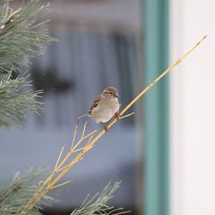 068. Bird (Misty Garrick) Tags: arboretum universityofminnesotalandscapearboretum landscapearboretum flowershow bird birds birding