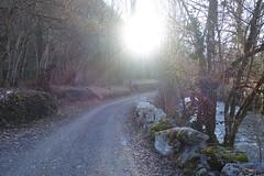 Trail along L'Eau Morte @ Doussard @ Walk in Doussard, Faverges, Giez & Lathuile (*_*) Tags: winter hiver 2019 february europe france hautesavoie 74 annecy savoie doussard sourcesdulacdannecy leaumorte morning matin