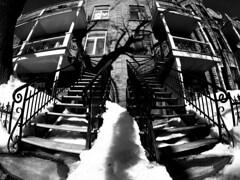 Mont-Royal Stairs (Montreal) (MassiveKontent) Tags: winter snow street contrast noiretblanc blackwhite blancoynegro montreal bw city monochrome urban blackandwhite streetphoto montréal quebec canada streetphotography bwphotography streetshot android absoluteblackandwhite frozen mono cold road cars montroyal plateau gopro stairs