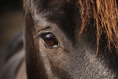 Regard (PhotOw'graphie) Tags: cheval animal horse pet tête oeil regard lumiere