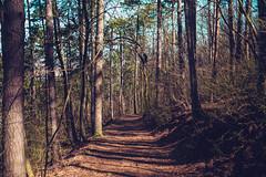 KRIS8092 (Chris.Heart) Tags: erdő buda budapest túra természet forest nature hiking
