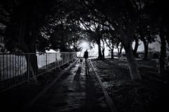 Sunrise (reiko_robinami) Tags: street streetphotography silhouette shadow lightandshadow monochrome blackandwhite dog yokohama japan