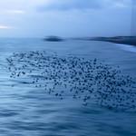 starling coast thumbnail