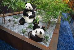Pandas (Don Claudio, Vienna) Tags: krankenhaus nord vienna north hospital kh wien floridsdorf brünner strase klinik panda
