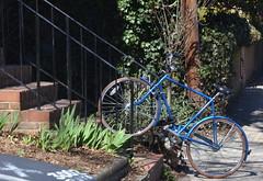 HeadedUpTheSteps (T's PL) Tags: nikontamron bike bricksteps d7000 nikon nikond7000 richmondva stairs tamron18270 tamron18270mmf3563diiivcpzd va virginia